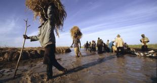 Des ONG appellent à une «nouvelle approche» dans la crise au Sahel