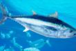 Des scientifiques alertent sur l'effondrement de la biodiversité en Méditerranée